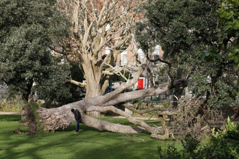 TIMBER: Storm Diana brought a tree down on Dublin's Merrion Sqaure on Wednesday. Photograph: Nick Bradshaw/The Irish Times