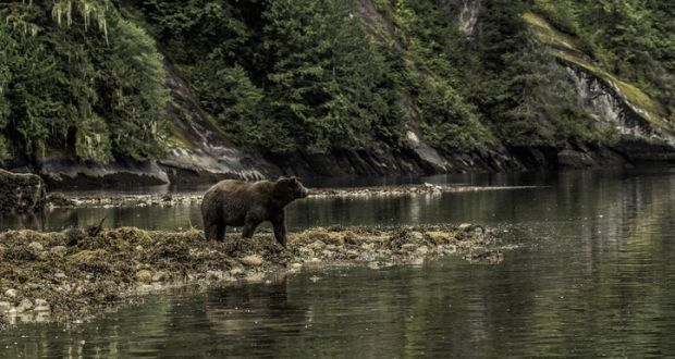 Grizzly Bear Kills Mother And 10 Month Old Baby In Canada