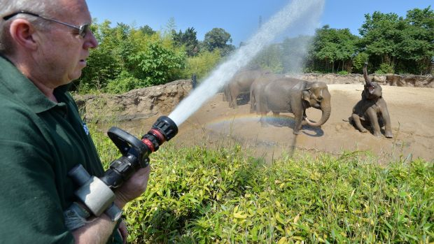 The Asian elephants soak up the spray from the water hose of Dublin Zoo Keeper Ciaran McMahon during daily soakings to keep cool during the June heatwave. Photograph: Alan Betson