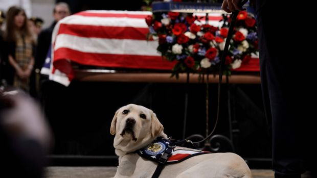 Sully, the service dog, lies next to the casket of former president George HW Bush in the US Capitol's rotunda on December 4th Photograph: Brendan Smialowski/AFP/Getty