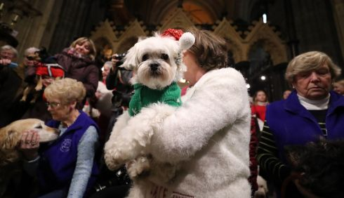 PET POOCH: A woman cradles a dog during the annual Peata Therapy Dog Carol Service at Christchurch Cathedral in Dublin. Photograph: Niall Carson/PA Wire