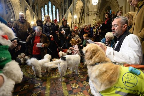 ON THE TILES: Rev Dermot Dunne, Dean of Christ Church Cathedral, among dogs of all sizes getting into the festive spirit at the Dublin cathedral for the annual Peata Therapy Dogs Carol Service. Photograph: Dara Mac Donaill/The Irish Times