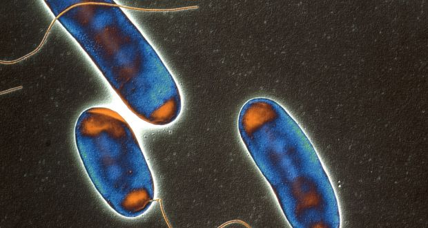 Legionella bacteria found in Dublin city offices