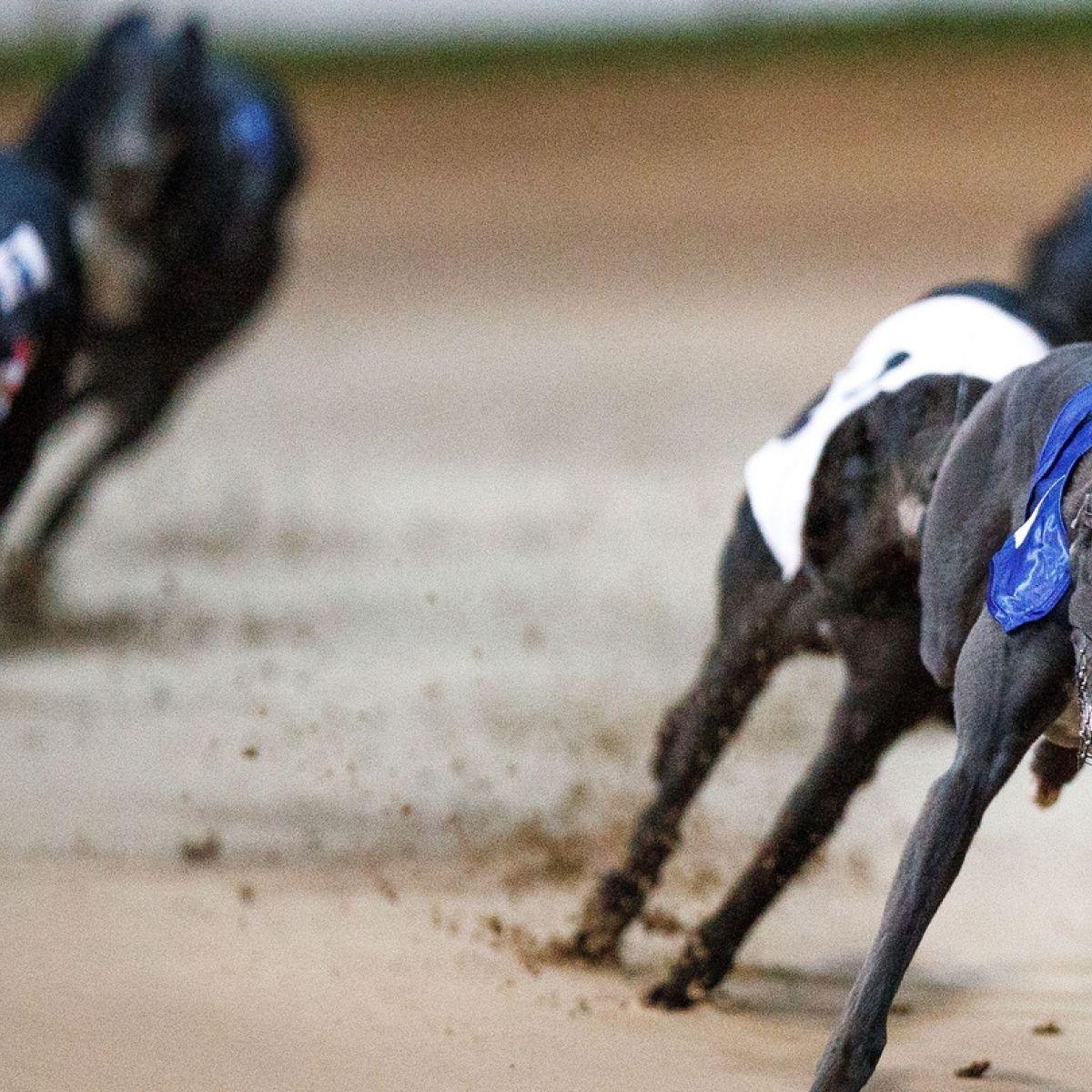 Irish greyhound derby betting 2021 movies spread betting payout chart