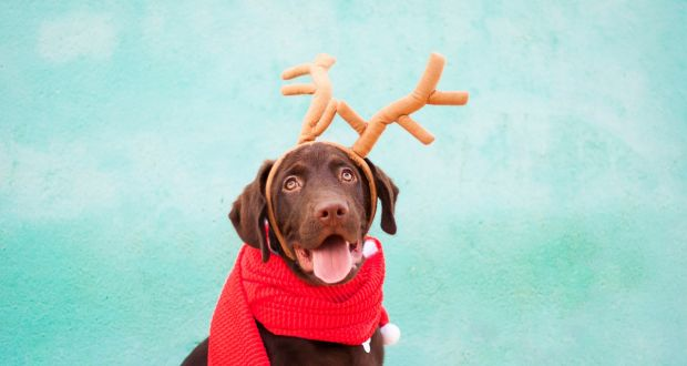 4b5a6a48f Paws for thought  The pros and cons of getting a dog for Christmas