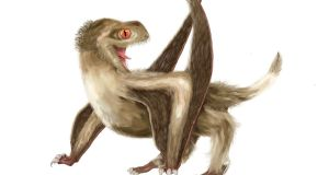 Pterosaurs, flying reptiles that lived side by side with dinosaurs,  had at least four types of feathers.