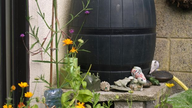 One way to future-proof our gardens is by harvesting/ storing rainwater in rain-barrels. Photograph: Richard Johnston