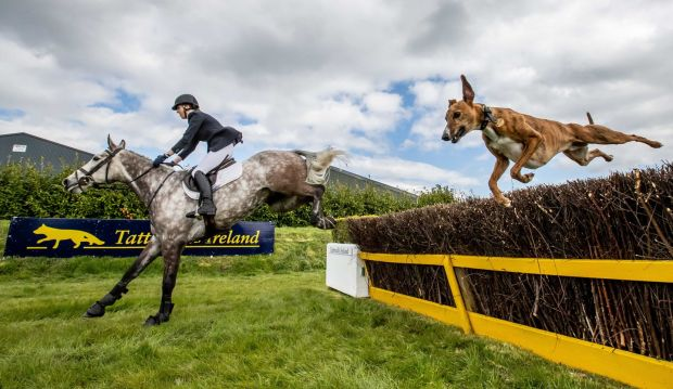 Photograph: Morgan Treacy/Inpho