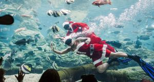 WET CHRISTMAS: South African divers dressed as Santa Claus wave to members of the public during a show at Africa's largest marine theme park, the South African Marine Biological Research Sea World, based at the uShaka Marine World in Durban. Photograph: Rajesh Jantital/AFP/Getty Images