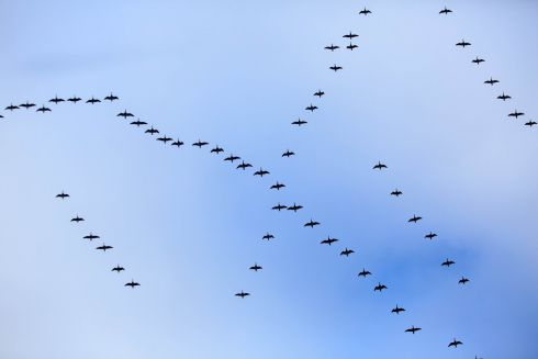 A flock of birds above Government Buildings on Merrion Street, Dublin. Photograph: Gareth Chaney/Collins