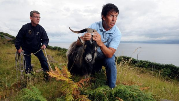 King Puck: Goatcatchers Pat Cahill and John McGrath capturing a wild goat for crowning at the fair in 2014. Photograph: Don MacMonagle