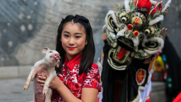 Connie Xintong Dai (11) with a piglet at the launch of the programme for the Dublin Chinese New Year Festival. Photograph: Gareth Chaney/Collins