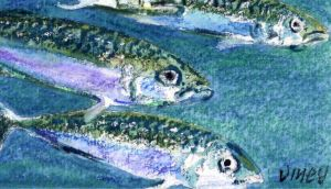 Mackerel may be in larger numbers outside traditional fishing waters, but are showing signs of starvation