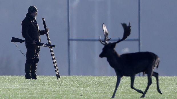 Urban deer cull riles Irish antis