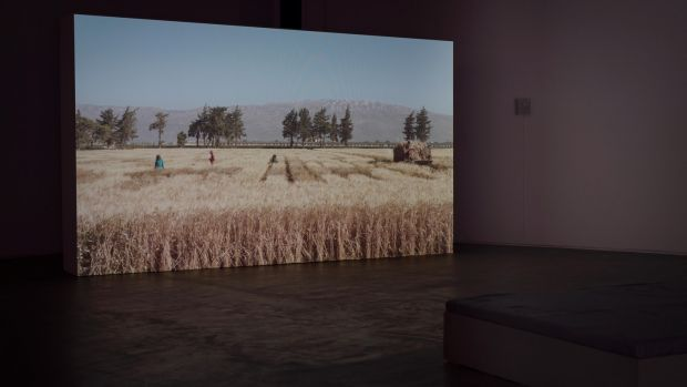 Jumana Manna, Wild Relatives (2018) installation view. Courtesy of the artist and the Douglas Hyde Gallery, 2019. Photograph: Louis Haugh