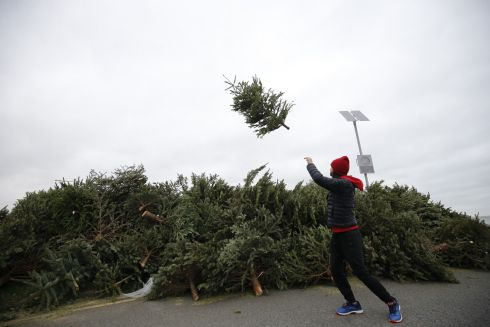 TREE-MENDOUS: Patrick Timmons Ward from Ranelagh, Dublin at the Christmas Tree recycling facility on Sandymount Strand on Janaury 7th. Photograph Nick Bradshaw/The Irish Times