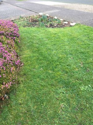 We mowed the lawn on Tuesday. We have never done it this early before. Photograph: Tom Farrelly