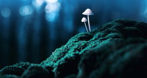 It's possible psilocybin drugs could soon be part of a psychiatrist's armoury.  Photograph: iStock