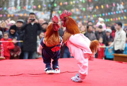 SHAKE YOUR TAIL FEATHER: Roosters dressed up in costumes are on display during a local chicken beauty pageant in Guang'an, Sichuan province, China. Photograph: Reuters