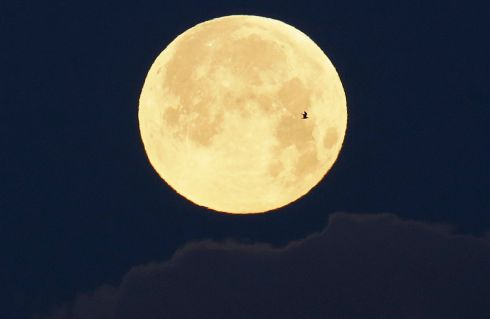 A bird flies in front of the setting full moon in Lisbon. Photograph: Armando Franca/AP Photo