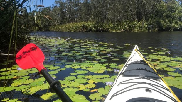 Kayaking in the Noosa Everglades