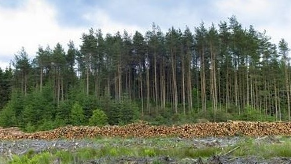 An independent study on the economic, social and environmental impacts of forestry in Co Leitrim has been commissioned by the Government.