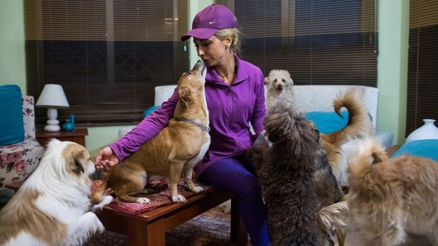 Hoda Sedghi Shamir breeds dogs and also looks after stray dogs and ones who need medical treatment in Tehran. Photograph: Arash Khamooshi via The New York Times
