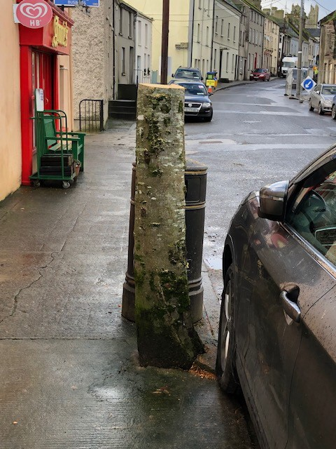Nine mature trees in the streets of Fethard village have been removed. Photograph: Alan Moore