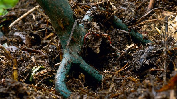 The size and design of your compost heap will make a difference to the finished result. Photograph: Getty