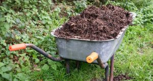 The size of the material in your compost heap will  affect the speed at which it breaks down.  Photograph: Getty