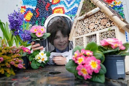 A BUG'S LIFE: Pupil Luke Coone with the class bee/bug hotel at Dunboyne senior primary school where EU delegates will come to mark it receiving a Tidy Towns award for its biodiversity efforts. Photograph: Nick Bradshaw for The Irish Times