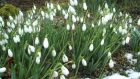 Snowdrop Festival, Kilbride estate, Tullow, Co Carlow