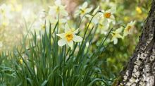 Sean Moncrieff: 'When does spring start? I don't know and neither do you'