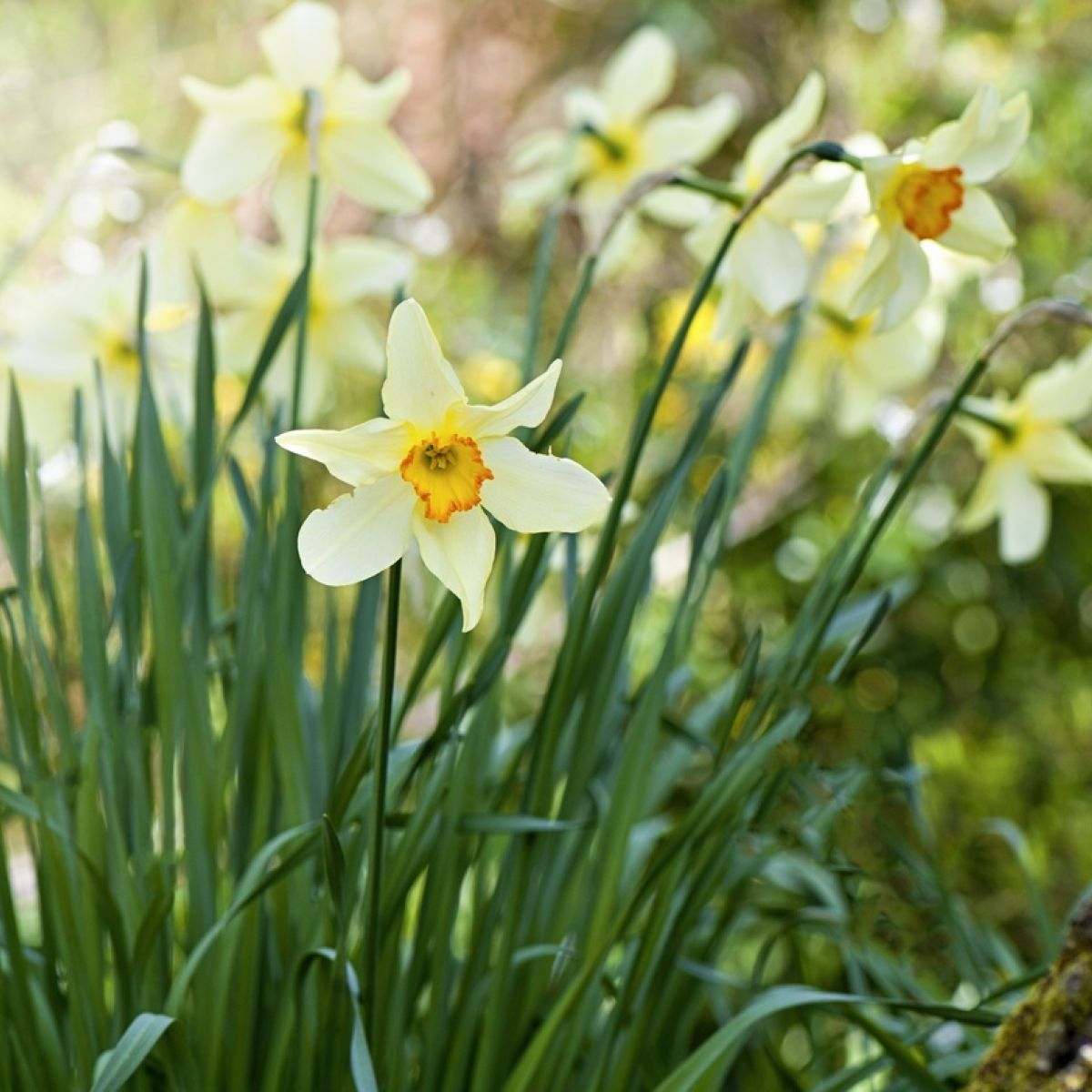 First frost of autumn, last frost of spring - The Irish Times