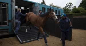 Any kind of checks on horses  take time, and time is at a premium when it comes to transporting animals. Photograph: Dan Kitwood/Getty Images