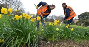 James Gill and Ian Delacey of Dublin City Council Parks and Gardens Department working in Merrion Square this week.Photograph: Alan Betson