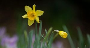 Temperatures reached an unseasonable 16 degrees in Dublin on Friday. Photograph:  National Trust/PA