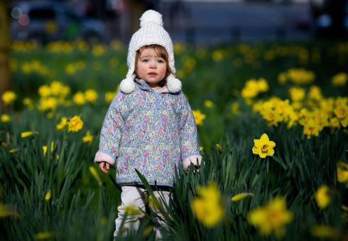 Annalise O'Leary, 1 year and 10 months, among the daffodils in Fairview Park, Dublin 3. Photograph: Tom Honan/The Irish Times.