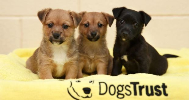 Christmas Puppies.Puppies Abandoned In Box On Roadside In Dublin After Christmas