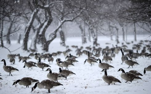 GROUNDED FLIGHTS: A flock of geese wait out a snowstorm on the National Mall near the Washington Monument in Washington, DC, US. Photograph: Win McNamee/Getty Images