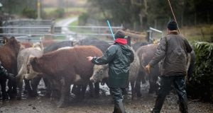 The Tánaiste said that trying to put Ireland under pressure in terms of beef 'is not a tactic or official position being adopted by the British government'.