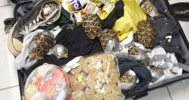 More than 1,500 turtles found abandoned in bags at Manila