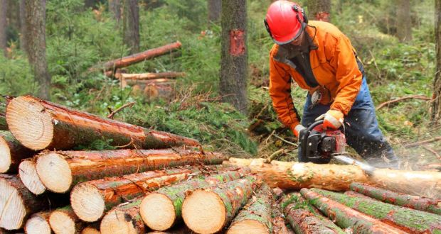 Bord na Móna cited in landmark EU case on use of forest biomass