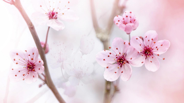 Pink Flowers Springtime Blooms 2 Fine Art Photograph Spring