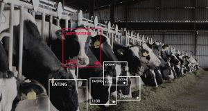 Irish agri-tech start-up Cainthus has developed technology that can identify cows using facial recognition and monitor their health and wellbeing, tracking their food and water intake, behaviour patterns and heat detection.