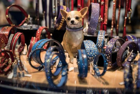 A dog model sits among bejewelled collars on a trade stall at the first day of the Crufts dog show in Birmingham, England. Photograph: Oli Scarff/AFP/Getty Images