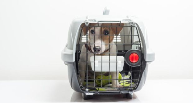 4f8699f697f5 Up to €300 vet bills for pets travelling between Ireland and UK in no-deal  Brexit