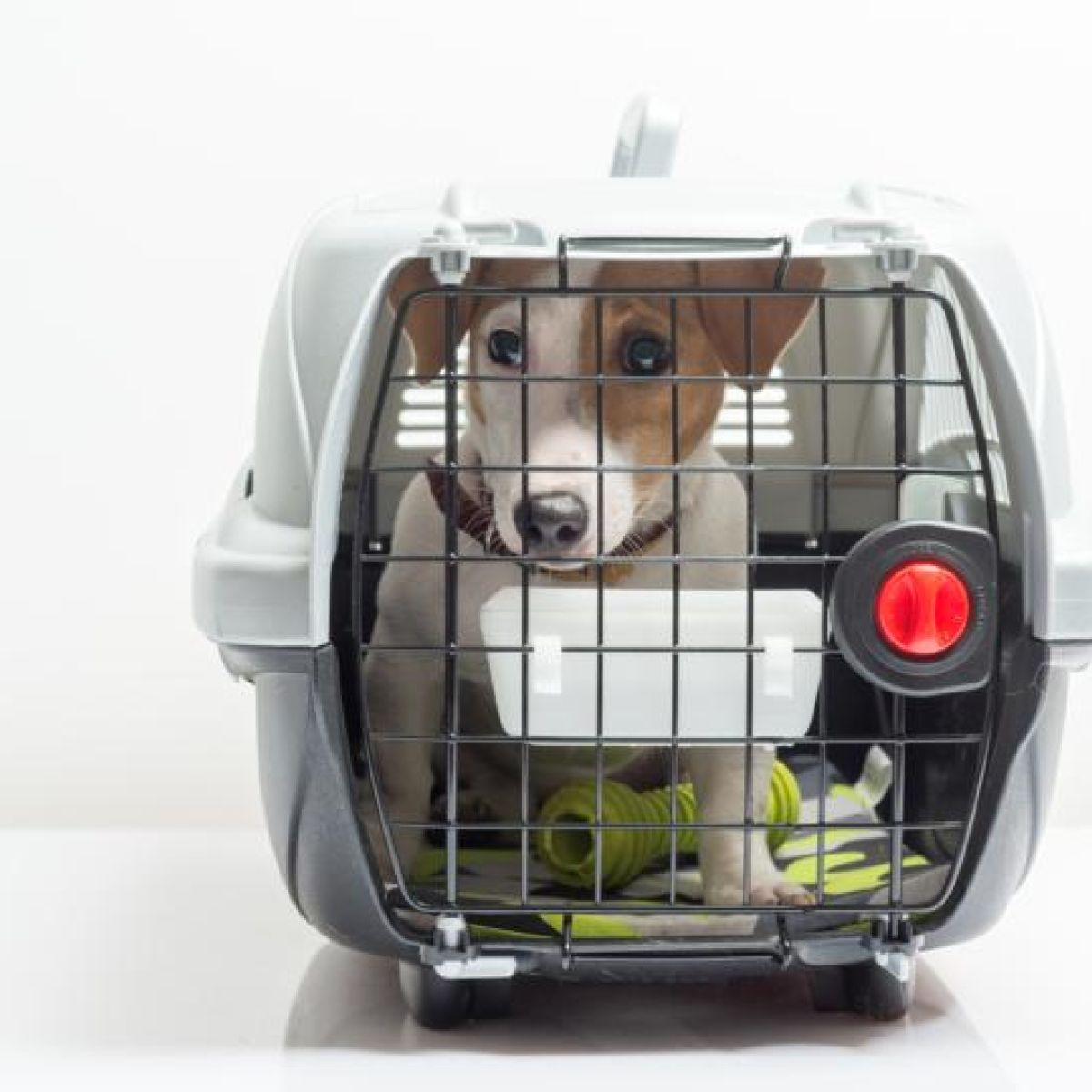 Up to €300 vet bills for pets travelling between Ireland and UK in