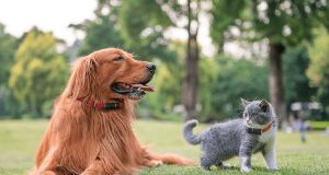 Tractive is a GPS tracker that has options for cats and dogs.