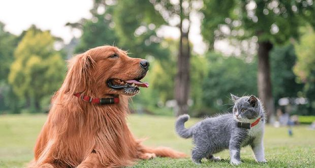 Do you have a pet that wanders? These tech solutions may help